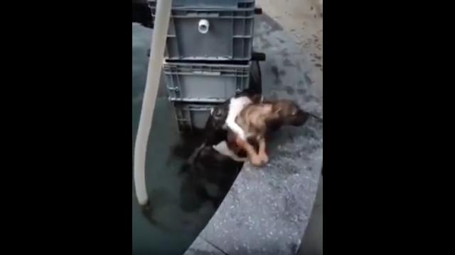 池に落ちて犬に助けてもらっておきながら、素っ気無く立ち去る猫