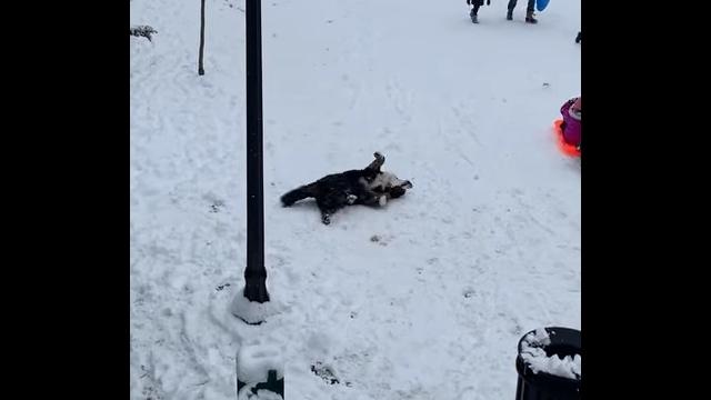 辺り一面の雪景色に大喜びのワンちゃん→雪の中ではしゃぎまくる