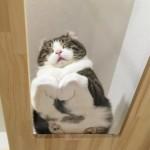 ガラス越しに下から撮影した、香箱座りが可愛い猫たちのシュールな写真