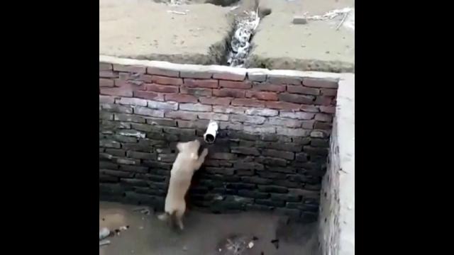深い堀の中から信じられない方法で脱出する犬がスゴイ!