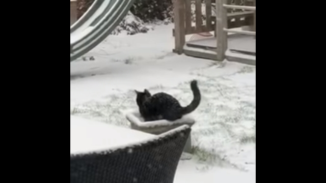 コタツよりも雪が好きな元気な猫