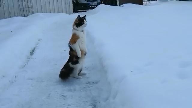 雪景色の中、二足立ちしながら周囲の様子をうかがう不思議な猫