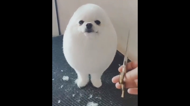 思わずモフりたくなるほど可愛いムクムクの犬