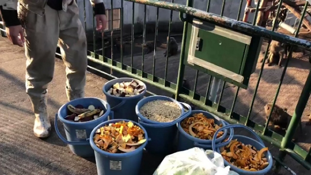 日本モンキーセンターのヒヒたちへの餌やリの方法が豪快すぎると話題に