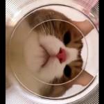 猫に狙われた金魚の目にはこんな風に映っているであろう絶望的な光景