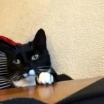 くつろぐ時の手の位置にただならぬこだわりのある猫