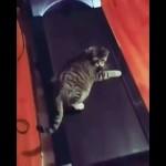 ルームランナーをお昼寝場所に選んだ猫・・・予想通りの結果に