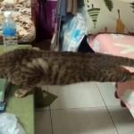 ストレッチをしながらご飯を食べる食欲旺盛な猫