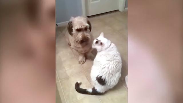 教訓・・・決して猫を無視することなかれ