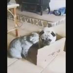 猫に追い立てられて居場所のないワンコが可哀相
