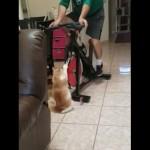 フィットネスバイクでエクササイズに励む飼い主のお手伝いをする猫