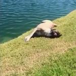 芝生の心地良い感触を満喫しているワンコに起きたプチ悲劇