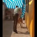防水シートに絡まって動けない犬を警察官が救出・・・最後の瞬間が可愛すぎる