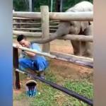 飼育係のお兄さんの仕事の邪魔をする赤ちゃんゾウが可愛い