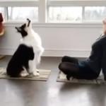 飼い主のエクササイズを真似する犬