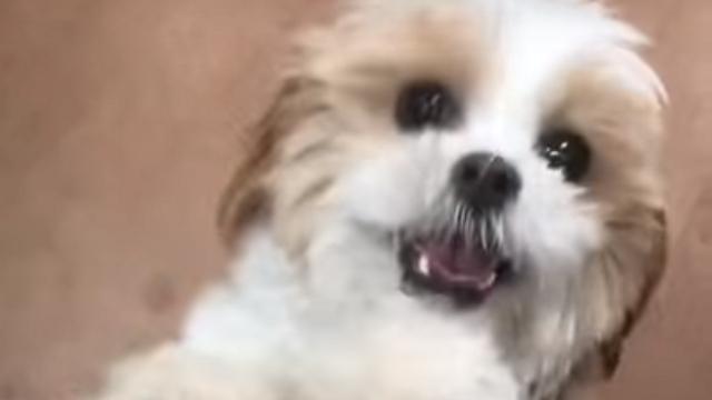 飼い主を見つけて喜び勇んで駆けて来る犬が可愛すぎる