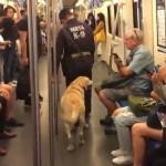 地下鉄の車内でくつろぐ麻薬探知犬の姿にほっこり^^