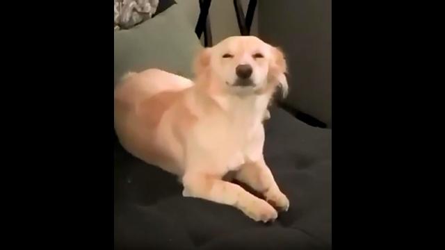 飼い主さんが帰宅すると、満面の微笑みで出迎えてくれる愛犬