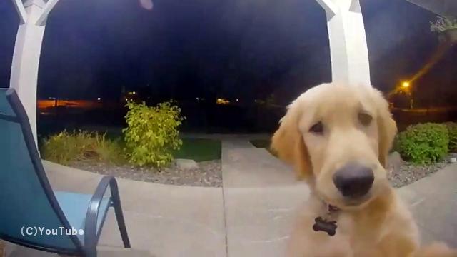 家を抜け出して外で遊んでいたら、閉めだしを喰らってしまった子犬の後悔の様子