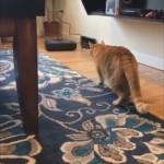 予測不可能な動きをするルンバにおびえて逃げ出す猫がおもしろ可愛い