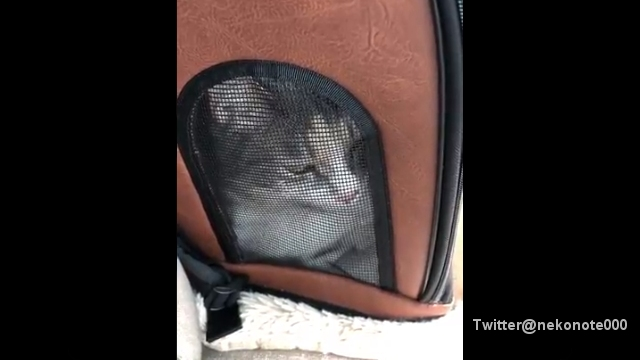 病院に連れて行くときに限り、不思議な鳴き声をあげる猫が話題に