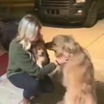 新しく家族になった子犬を歓迎するゴールデンレトリバー