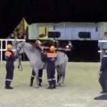 馬を使った救護活動のデモンストレーションがとんでもないことに・・・
