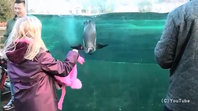 ピンクのぬいぐるみで水族館のペンギンを手懐ける女の子