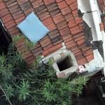 窓から隣家の屋根に落ちてしまった犬用枕 → 確認すると、既に別の持ち主のものになっていた