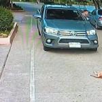 道路の中央でお昼寝をしていて、車が近づいても退こうとしない怠慢な犬