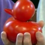 アヒルじゃないよ、トマトだよ