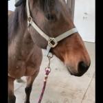 馬の耳に手袋をかぶせてみたら、別の生きものみたいでおもしろ可愛い
