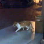 歩いているのに前に進めず、ムーンウォークをしているみたいな猫