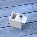 こんなの嫌だ!? ・・・ 箱を開けると蜘蛛がとび出すビックリ箱が恐ろしい