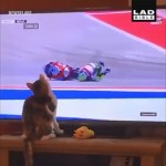 バイクレースの中継を観戦している猫と画面が見事にシンクロしたおもしろい映像