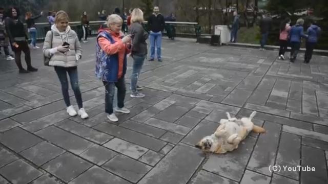 仰向けに寝転がって観光客の注意を引きつける愛嬌たっぷりな犬