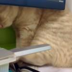 液晶モニターが邪魔をして痒いところに足が届かない猫