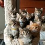 9匹の子猫をベストアングルで一枚の写真に収めようと奮闘する飼い主