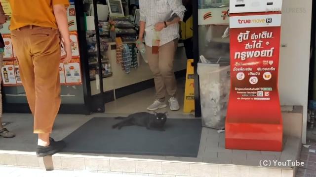 食料品店の入り口に居座り暑さを凌ぐバンコックの野良猫