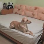 お留守番中の愛犬は普段何をしているのか気になった飼い主 → 愛犬を観察してみると・・・