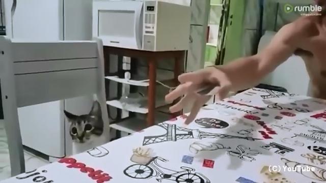 単純なカードマジックにまんまと騙される猫がおもしろ可愛い