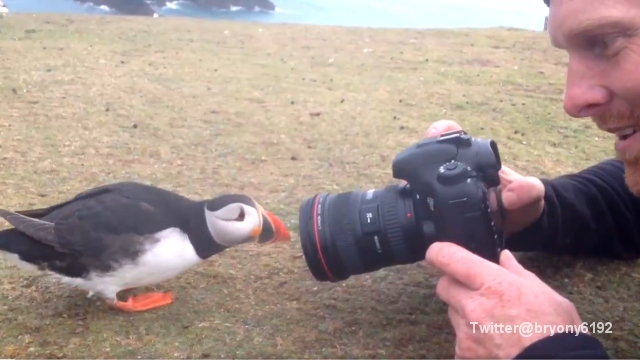 ツノメドリを撮影していて、またとないチャンスに遭遇したカメラマン