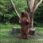 まるでダンスをしているような富士サファリパークのクマが可愛い