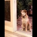 ドアが開いているのに部屋の中に入らない犬