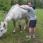 野生の馬に乗ろうとしてブッ飛ばされてしまった男性