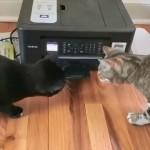 印刷中のプリンターの音におっかなびっくりな2匹の猫がおもしろい