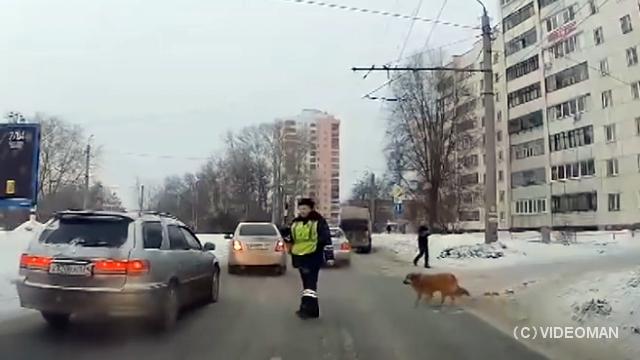 道路を横断しようとする足の不自由な犬を気遣う心優しいお巡りさん