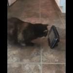 光を反射する物に対して攻撃的になる猫。さまざまなオブジェクトで試してみた結果・・・