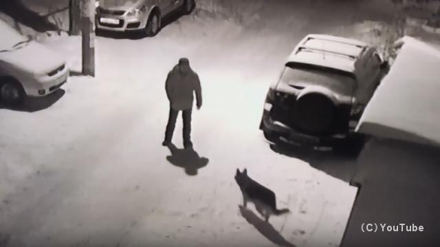 因果応報|犬を蹴ろうとして罰が当たった酔っ払いの男性
