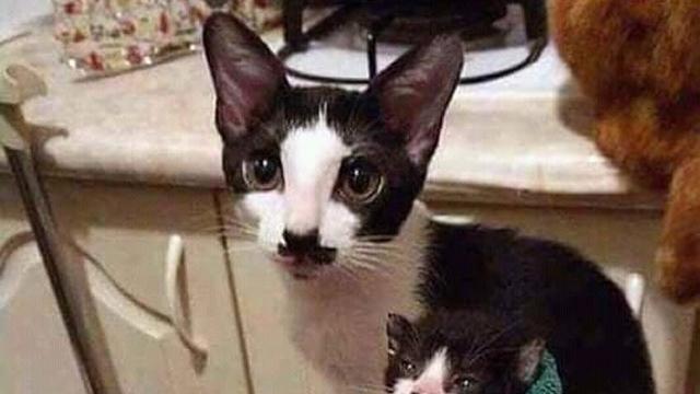 「DNA鑑定が必要だと思う?」・・・ そのまんまコピーしたような瓜二つの猫の親子